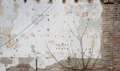 Alison Bur •Brunswick Branch •September - November